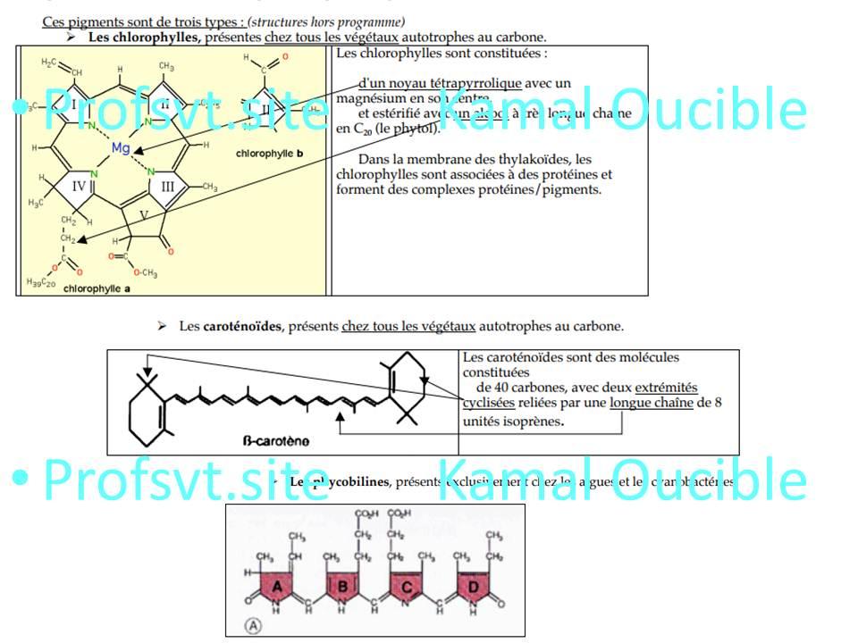 le magnesium mg est un element present dans la chlorophylle